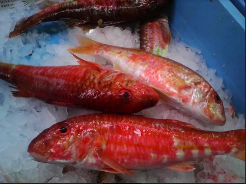 Mariscos y pescados Baeza
